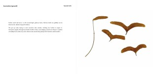 birdlife with poetry and writing by Nyanda Smith, Nandi Chinna, Michael Farrell, Graeme Miles and photographs and drawings by Perdita Phillips (page 16-17)
