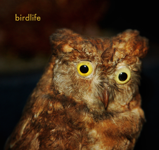 birdlife with poetry and writing by Nyanda Smith, Nandi Chinna, Michael Farrell, Graeme Miles and photographs and drawings by Perdita Phillips