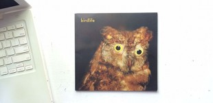 birdlife in the Indie Photobook Library