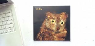 birdlife in the Indie Photobook Library